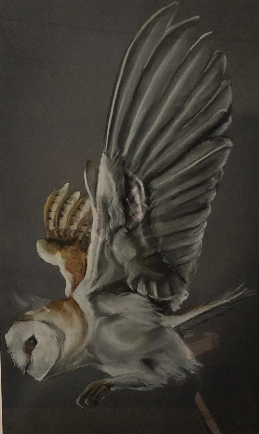 bella art barn owl framed art limited edition