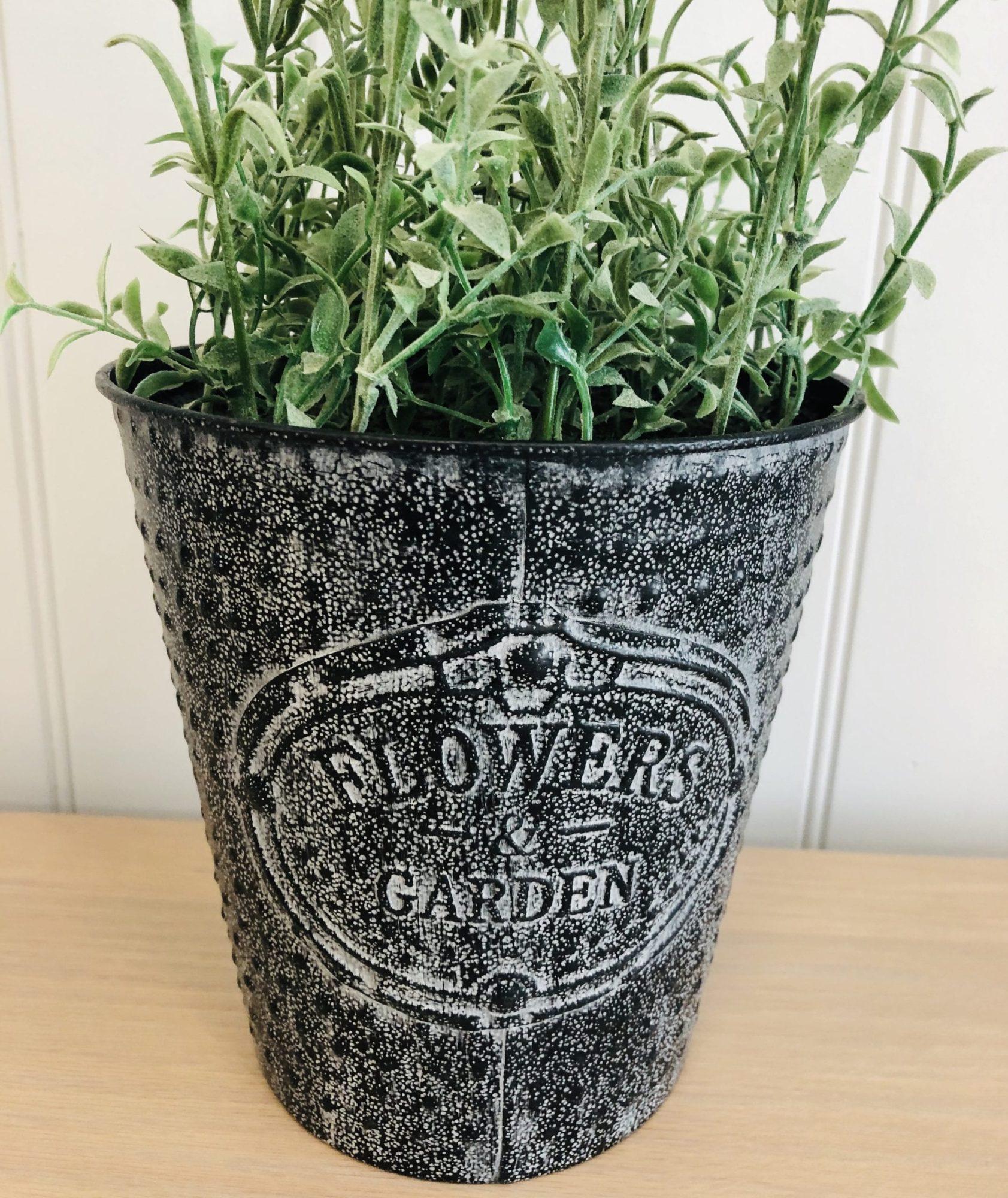 Lavender pot Flower garden close up