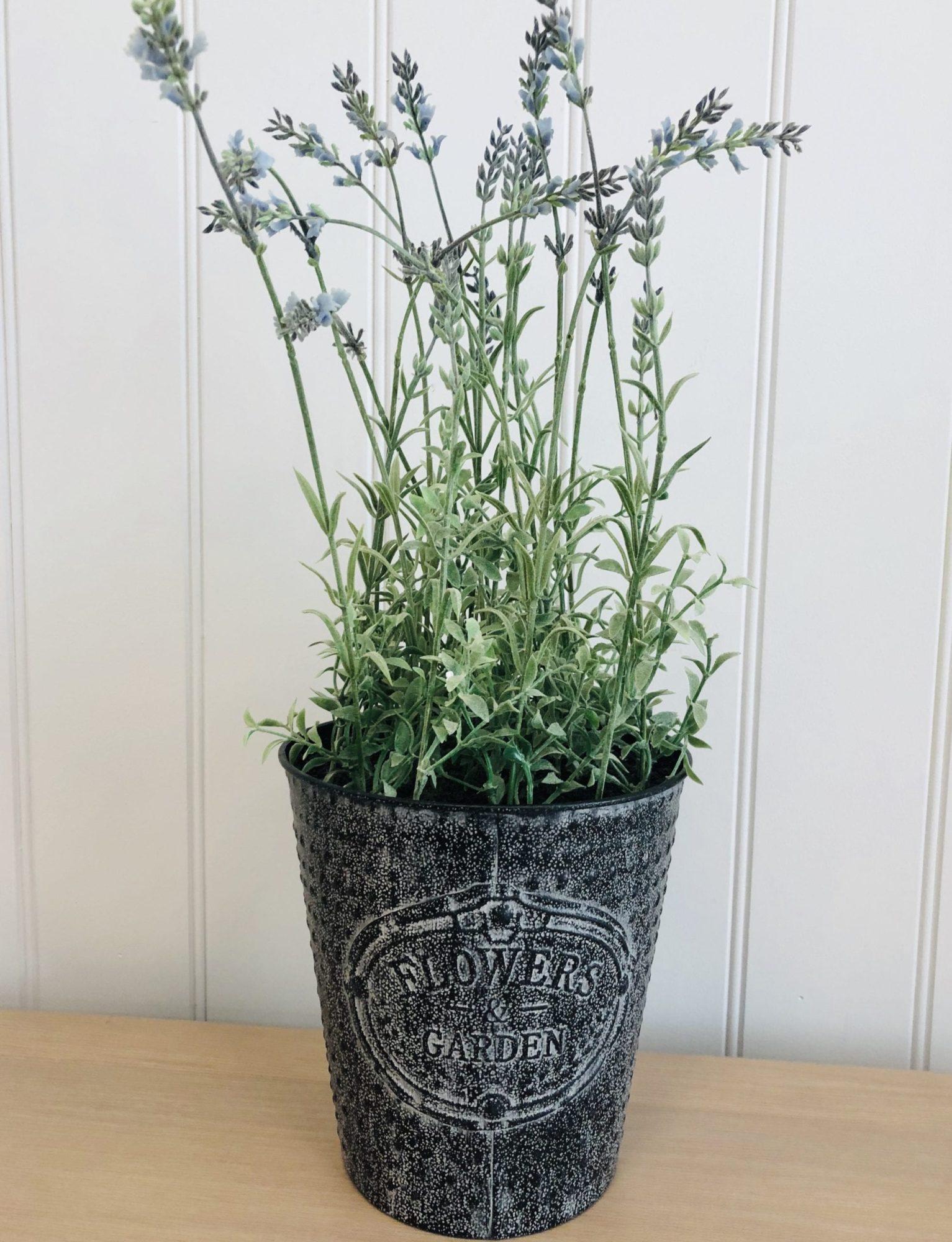 Lavender pot -Flower garden