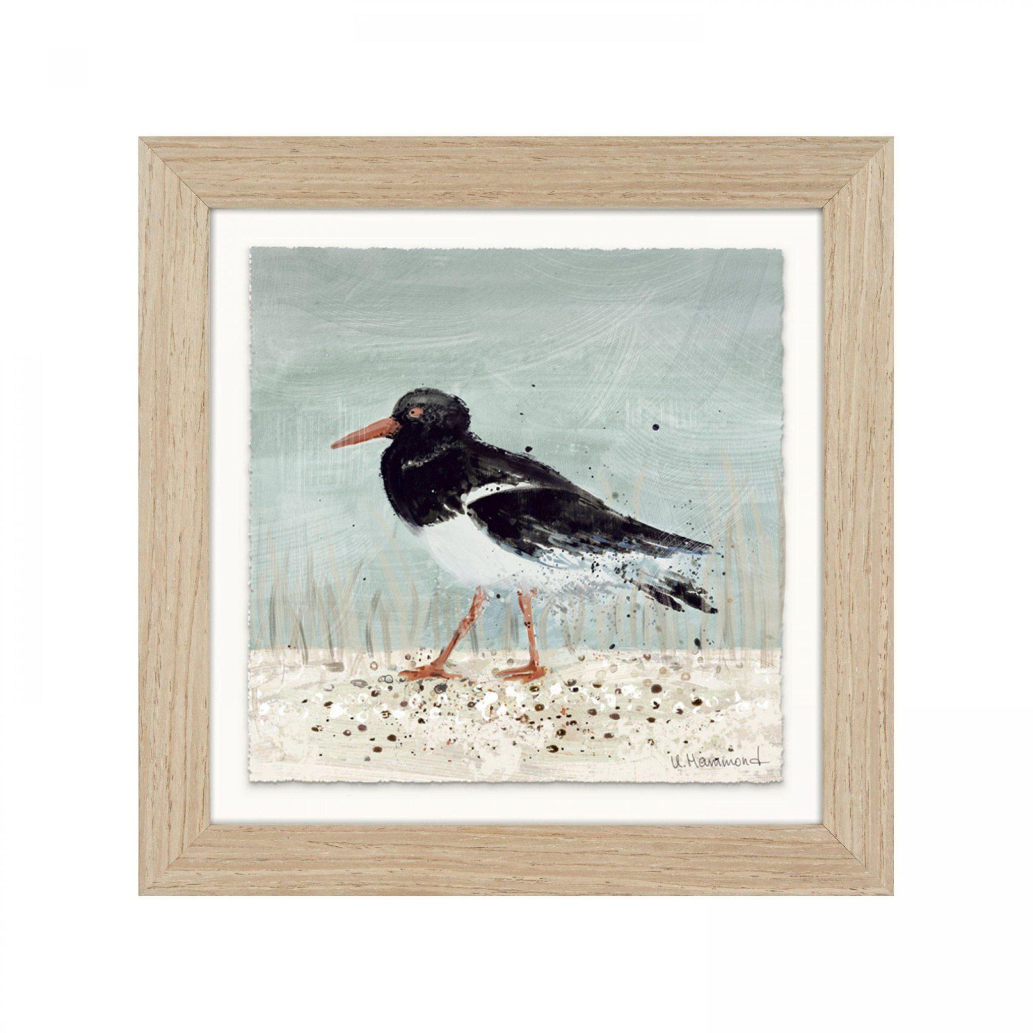 Oyster Catcher framed art