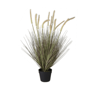 Onion Grass with Cattail in Pot
